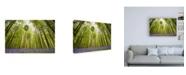 "Trademark Global Wilco Drag Hallerbos Canvas Art - 19.5"" x 26"""