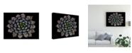 "Trademark Global Victor Mozqueda Echeveria Setosa Var Deminuta Canvas Art - 20"" x 25"""