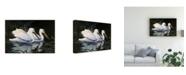 """Trademark Global Michael Budden Pelicans Swimming Canvas Art - 20"""" x 25"""""""