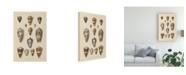 "Trademark Global Wild Apple Portfolio Shell Assorment I Canvas Art - 15"" x 20"""