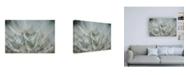 "Trademark Global Renee W. Stramel Macro Dandelion V Canvas Art - 27"" x 33.5"""