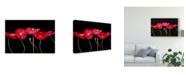 "Trademark Global Sandra Iafrate Dramatic Poppies Canvas Art - 37"" x 49"""