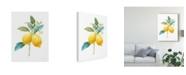 "Trademark Global Danhui Nai Floursack Lemon IV on White Canvas Art - 20"" x 25"""
