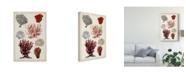 "Trademark Global Naomi Mccavitt Antique Coral Study I Canvas Art - 20"" x 25"""
