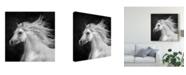 "Trademark Global PH Burchett Black and White Horses IV Canvas Art - 15"" x 20"""