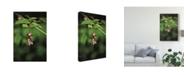 "Trademark Global Christine Sainte-Laudy Floral Chime Canvas Art - 15"" x 20"""