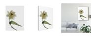 "Trademark Global Judy Stalus Xray Tulip II Canvas Art - 20"" x 25"""