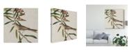 "Trademark Global John James Audubon Avian Crop VII Canvas Art - 15"" x 20"""