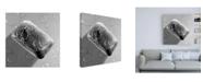 """Trademark Global Roderick Stevens Black & White Soap Canvas Art - 15.5"""" x 21"""""""