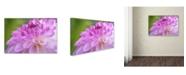 "Trademark Global Cora Niele 'Cerise Pink Dahlia' Canvas Art - 47"" x 30"" x 2"""