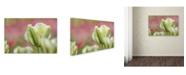 "Trademark Global Cora Niele 'White and Green Tulip' Canvas Art - 24"" x 16"" x 2"""