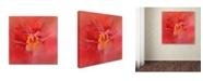 "Trademark Global Jai Johnson 'Salmon Hibiscus 1' Canvas Art - 24"" x 24"" x 2"""
