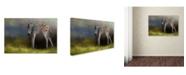 "Trademark Global Jai Johnson 'New Life 2' Canvas Art - 19"" x 12"" x 2"""