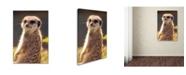 """Trademark Global Robert Harding Picture Library 'Meerkat' Canvas Art - 19"""" x 12"""" x 2"""""""