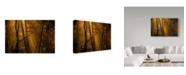 """Trademark Innovations Norbert Maier 'Orange Forest' Canvas Art - 24"""" x 2"""" x 16"""""""