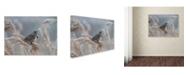 "Trademark Global Piotr Fras 'Bluethroat' Canvas Art - 24"" x 18"" x 2"""
