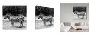 """Trademark Global Incredi 'Gray Zebra' Canvas Art - 18"""" x 18"""""""