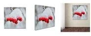 """Trademark Global Kurt Shaffer 'Winter Berry Close-Up' Canvas Art - 18"""" x 18"""""""