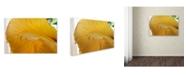 "Trademark Global Kurt Shaffer 'Yellow Hibiscus Study I' Canvas Art - 30"" x 47"""