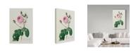 "Trademark Global Pierre-Joseph Redoute 'Rosa Centifolia Bullata' Canvas Art - 30"" x 47"""