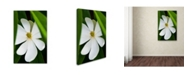 "Trademark Global Kurt Shaffer 'Magnolia' Canvas Art - 32"" x 22"""