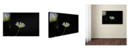 "Trademark Global Monica Fleet 'Light in the Dark' Canvas Art - 32"" x 22"""