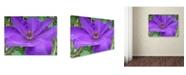 """Trademark Global Monica Fleet 'Purple Flower' Canvas Art - 47"""" x 35"""""""