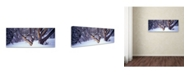 "Trademark Global David Evans 'Highcountry Snowgums' Canvas Art - 47"" x 16"""