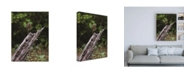 "Trademark Global Kurt Shaffer Photographs Green Heron Stare Down Canvas Art - 19.5"" x 26"""