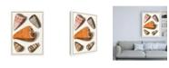 "Trademark Global Vision Studio Collected Shells IX Canvas Art - 19.5"" x 26"""