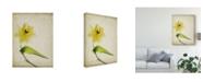 "Trademark Global Judy Stalus Parchment Flowers VII Canvas Art - 20"" x 25"""