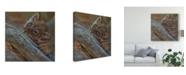 "Trademark Global Pip Mcgarry Play Lion Cub Canvas Art - 15"" x 20"""