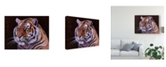 "Trademark Global Pip Mcgarry Bengal Tiger Portrait Canvas Art - 20"" x 25"""