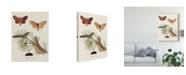 "Trademark Global Johann Esper Life Cycle of a Moth II Canvas Art - 15"" x 20"""