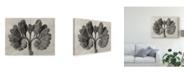 "Trademark Global Karl Blossfeldt Ua Ch Blossfeldt Botanical VIII Canvas Art - 20"" x 25"""