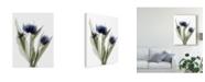 "Trademark Global Judy Stalus Xray Tulip IX Canvas Art - 37"" x 49"""