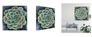 "Trademark Global Chariklia Zarris Succulent Rosette II Canvas Art - 15"" x 20"""
