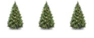 National Tree Company National Tree 6 .5' Carolina Pine Tree with 650 Clear Lights