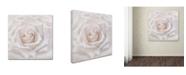 "Trademark Global Cora Niele 'Soft White Rose' Canvas Art - 14"" x 14"" x 2"""