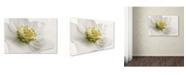 "Trademark Global Cora Niele 'White Helleborus' Canvas Art - 19"" x 12"" x 2"""