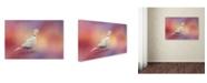 "Trademark Global Jai Johnson 'Spring Eurasian Collared Dove' Canvas Art - 24"" x 16"" x 2"""
