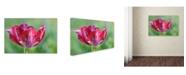 "Trademark Global Cora Niele 'Ruby Rembrandt Tulip' Canvas Art - 19"" x 12"" x 2"""