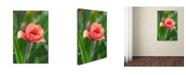 "Trademark Global Cora Niele 'Tulip Flower Parabola' Canvas Art - 47"" x 30"" x 2"""