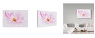 "Trademark Global Cora Niele 'Dancing Flower Cosmos' Canvas Art - 24"" x 16"" x 2"""