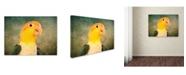 "Trademark Global Jai Johnson 'White Bellied Caique Portrait' Canvas Art - 47"" x 35"" x 2"""