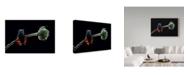 "Trademark Global Savas Sener 'X Ray' Canvas Art - 32"" x 2"" x 22"""