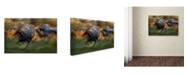 "Trademark Global Milan Malovrh 'Fiery Gallop' Canvas Art - 24"" x 16"" x 2"""