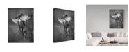 "Trademark Global Istvan Nagy 'Crocus Bw' Canvas Art - 18"" x 24"""