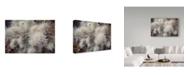 "Trademark Global Janice Sullivan 'Cholia' Canvas Art - 24"" x 16"""