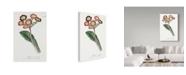 "Trademark Global Italian School 'Primula Elatior' Canvas Art - 12"" x 19"""